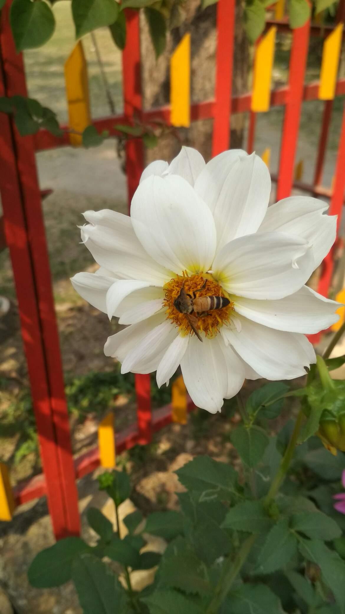 Macro Shots On Beautiful Flowers Weku